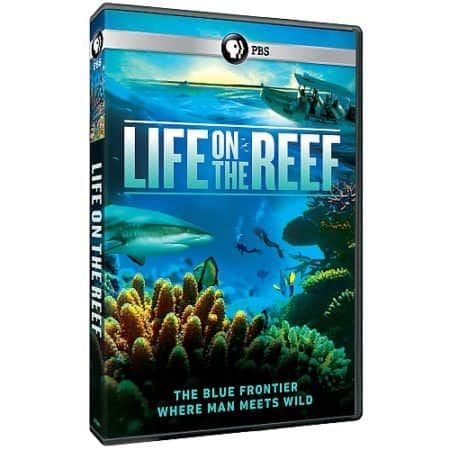 LIFE ON THE REEF 1