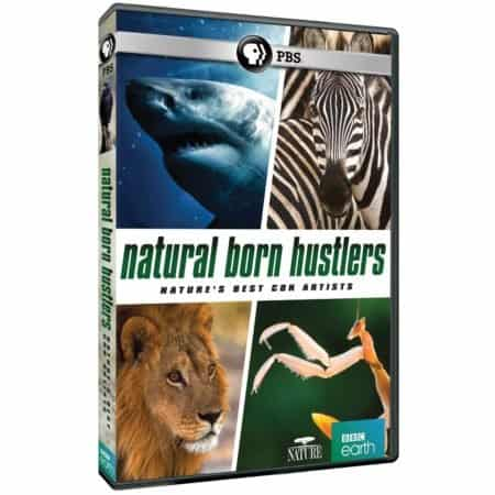 NATURAL BORN HUSTLERS: NATURE'S BEST CON ARTISTS 22
