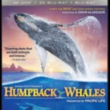 HUMPBACK WHALES 4K 18