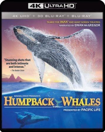 HUMPBACK WHALES 4K 8