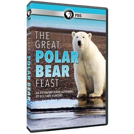 GREAT POLAR BEAR FEST, THE 9