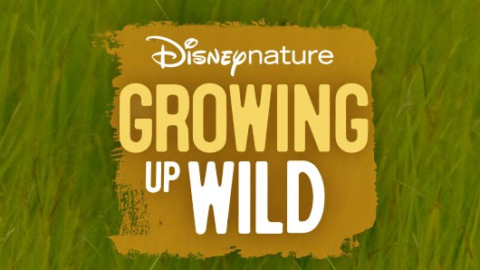 GROWING UP WILD 1