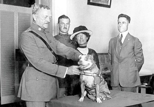 SGT. STUBBY: AN AMERICAN HERO 7