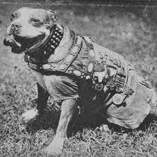 SGT. STUBBY: AN AMERICAN HERO 5