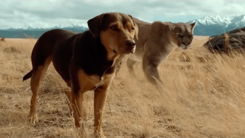 A Dog's Way Home (2019) 13