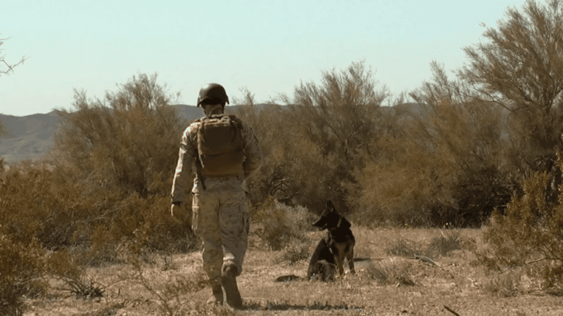 Canine Soldiers review: PTSD for Puppers 1