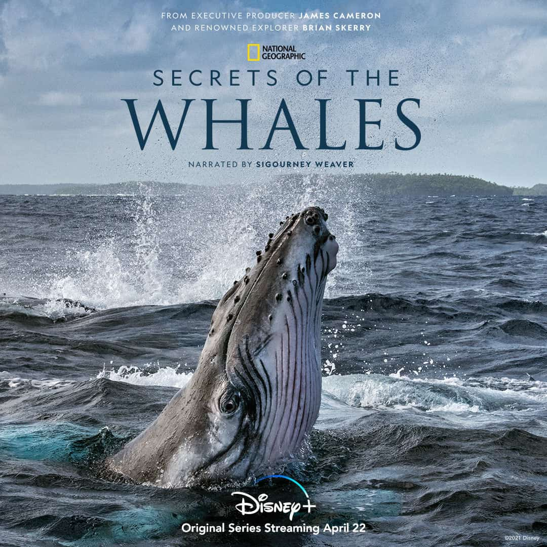 Secrets of the Whales stream
